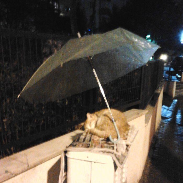 gatito protegido