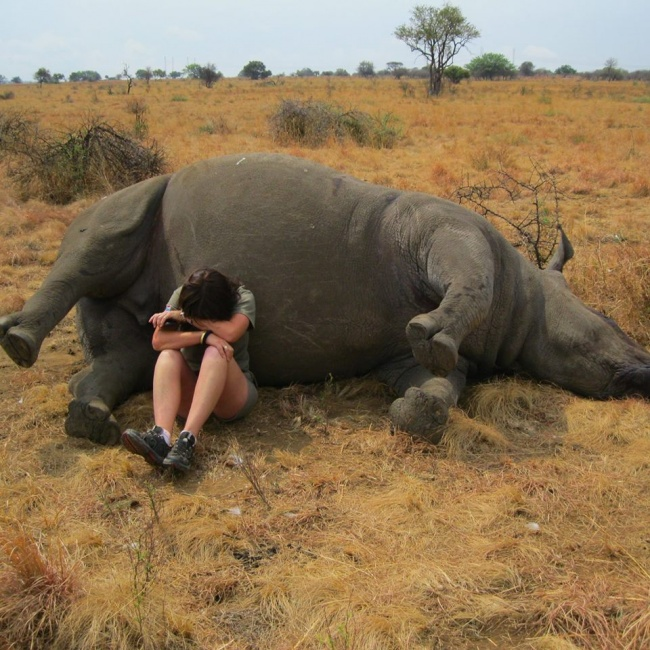 rinoceronte muerto