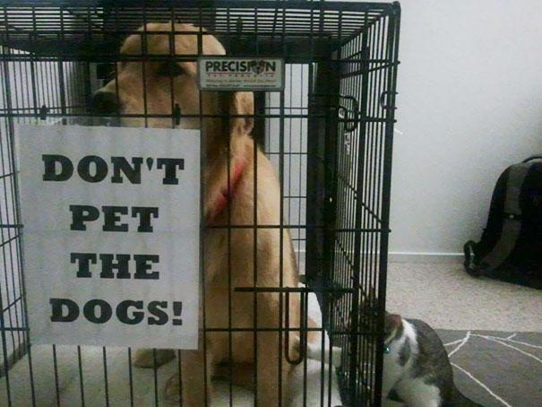 gato acariciando a perro en jaula