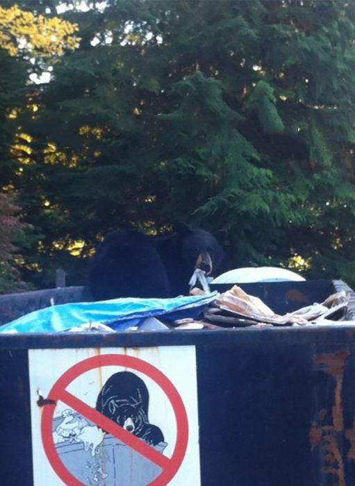 oso hurgando en la basura