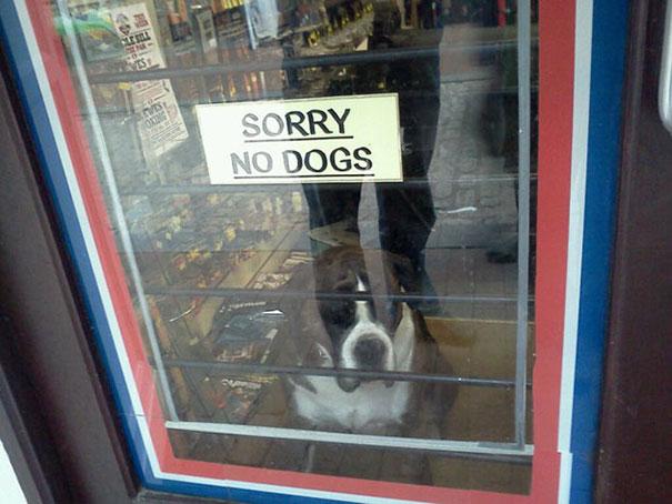 Letrero SORRY NO DOGS y perro adentro