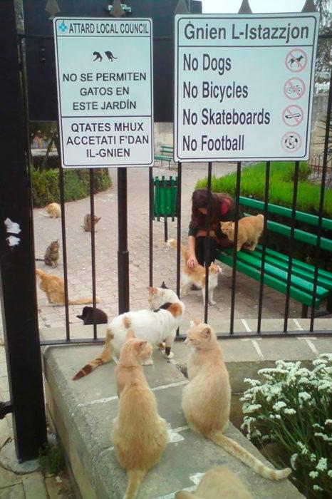 parque lleno de gatos