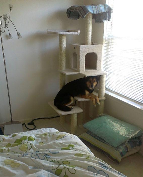 perro en juego de gato