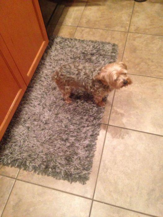 tapete igual al perro