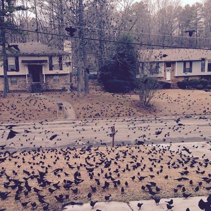 Mañana nublada con pájaros