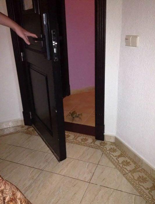Cangrejo toca la puerta