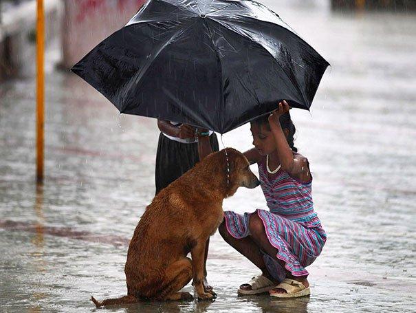 Niña cubre a perrito con paraguas