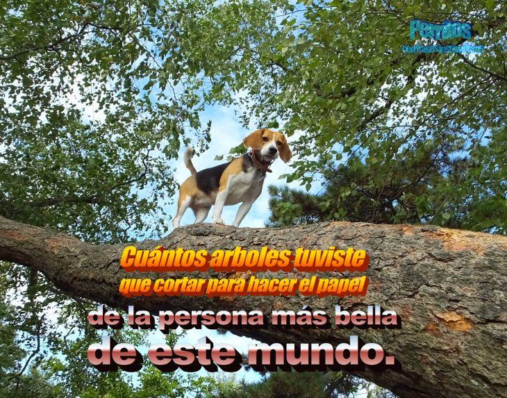 beagle frase motivadora