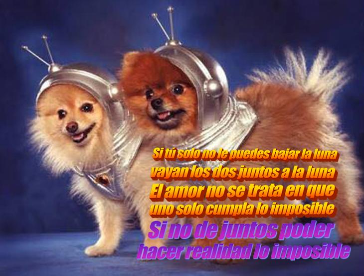 perritos astronautas
