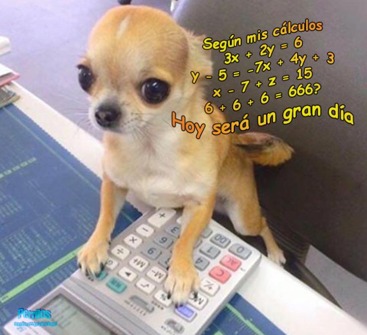 perrito calculadora