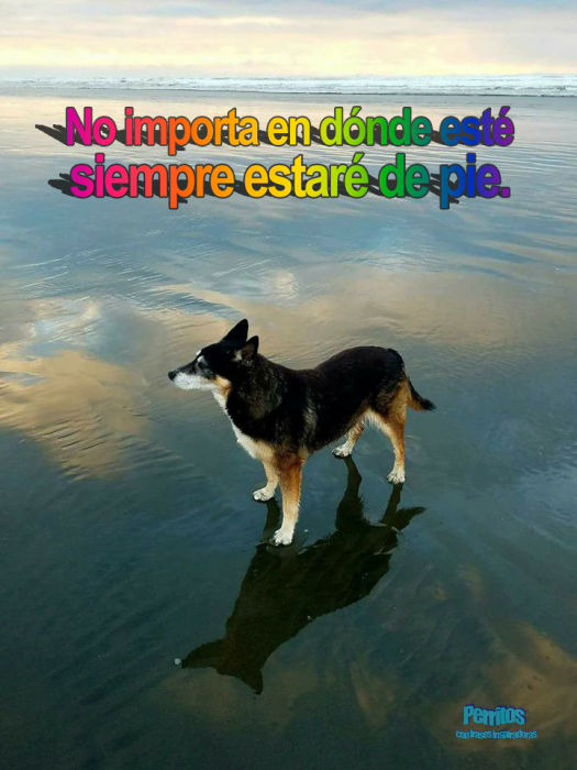 perrito mar word art