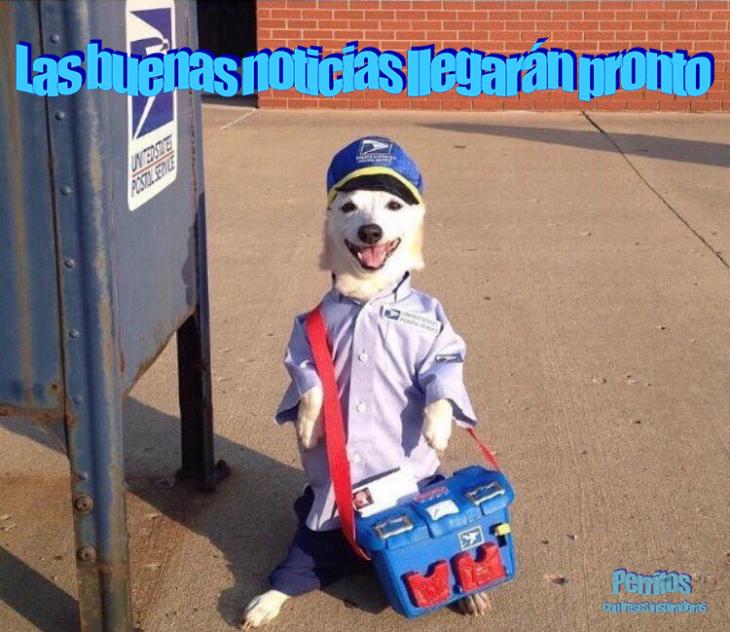 correo perrito cartero