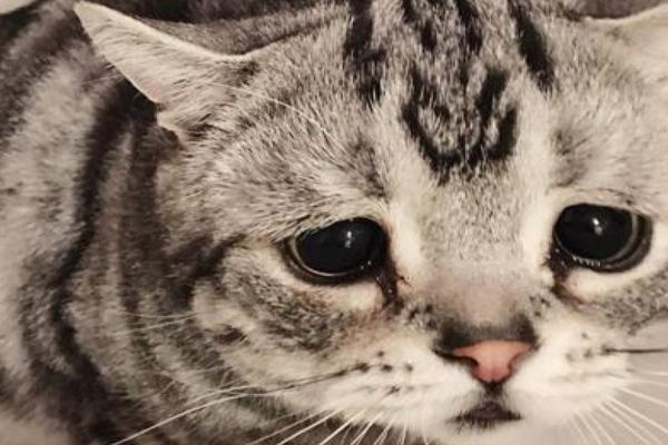 gato triste con ojos llorosos