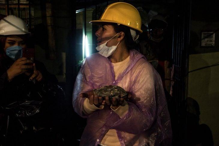 Terremoto México - rescatan tortuga