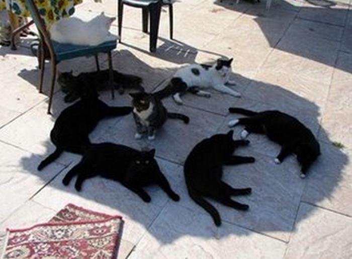 Gatos en la sombra