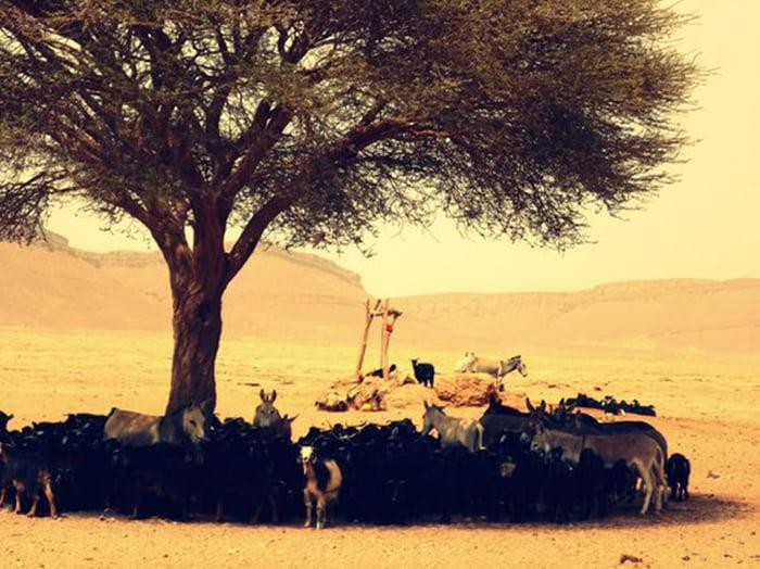 Animales bajo el árbol