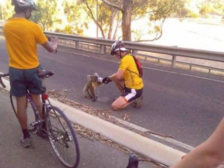 Ciclistas dan agua a koala
