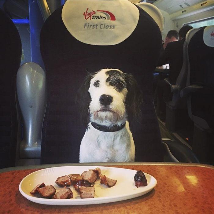 perro comida avión
