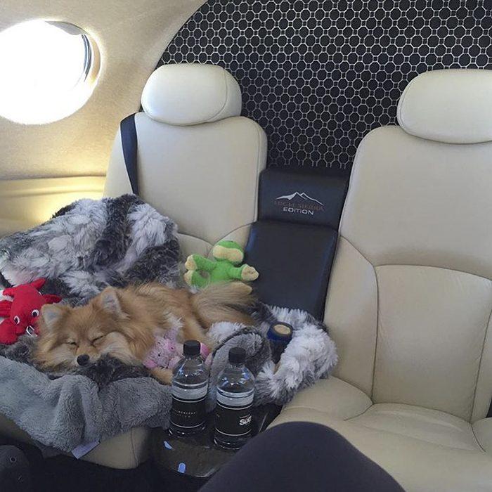 perro en jet privado