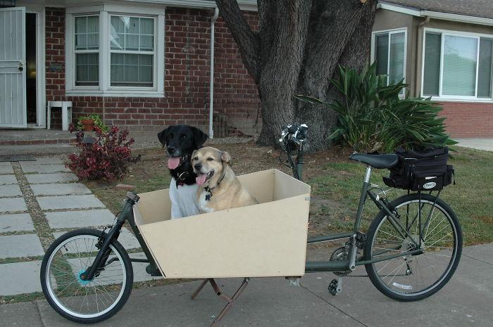 perros en bicicleta