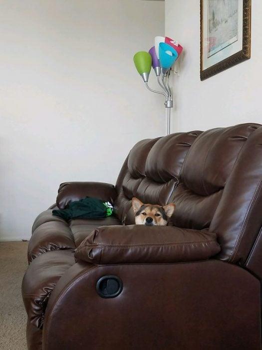 perro viendo a su dueño en el sillón
