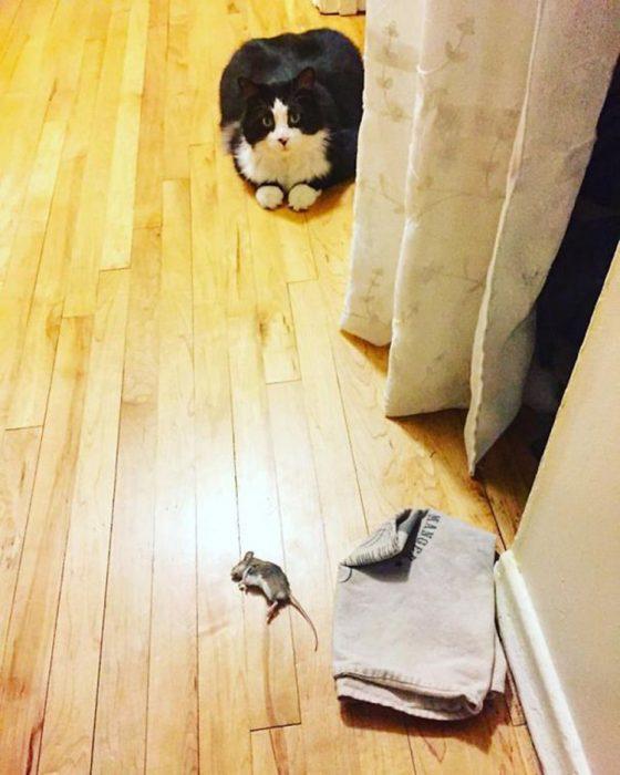 Gato retón regalo