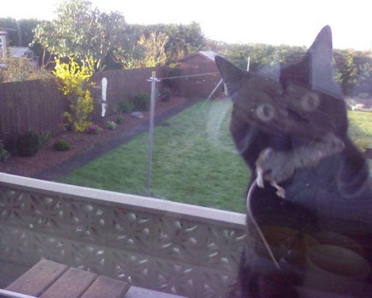 Gato regalo ratón