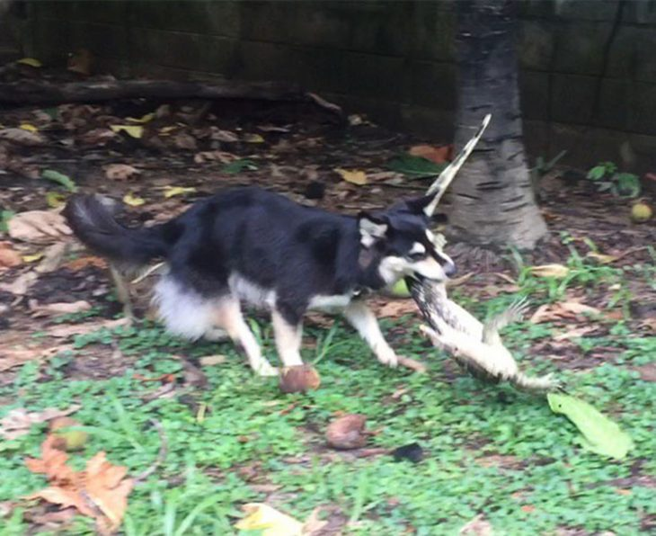 Perro regalo reptil