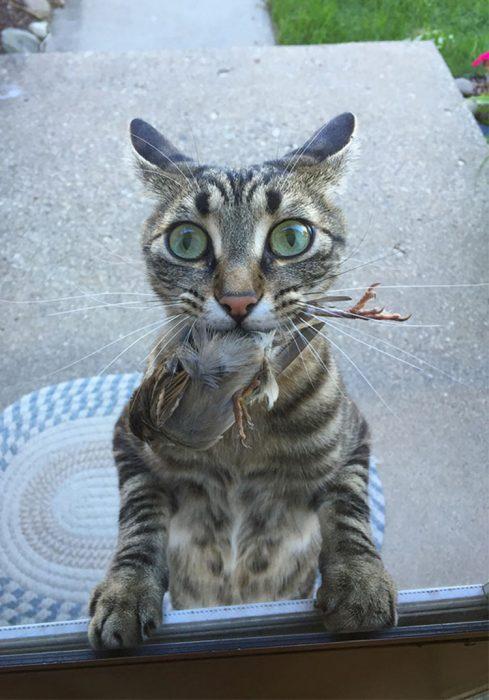 Gato regalo tortuga