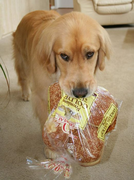 Perrito pan de hamburguesa