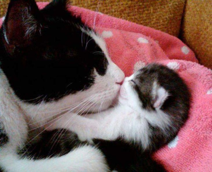 besito madre gata