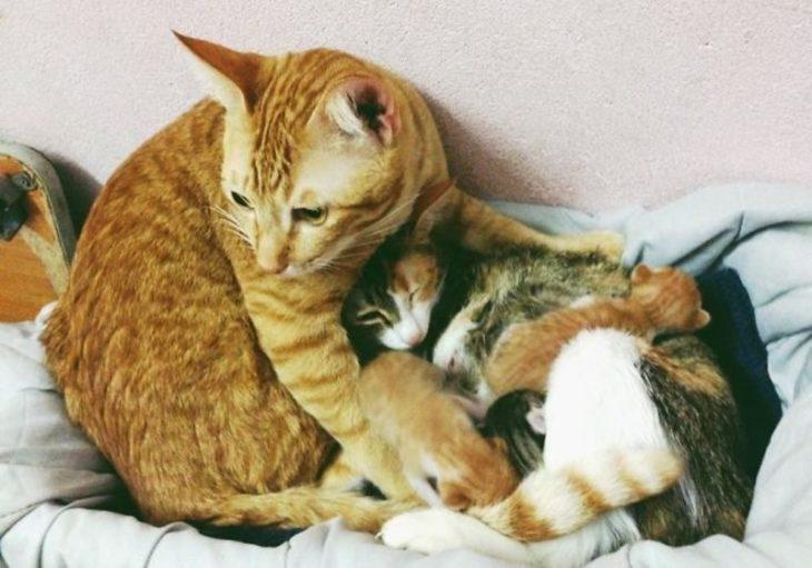 padre cuidado de gatos