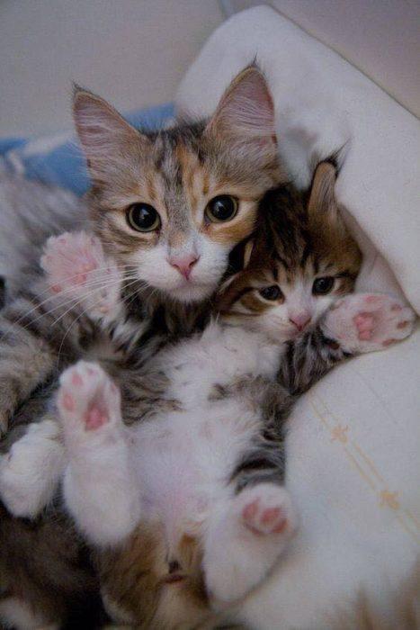 cachorro gato minino madre