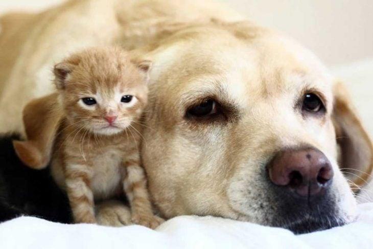 perro y gato familia