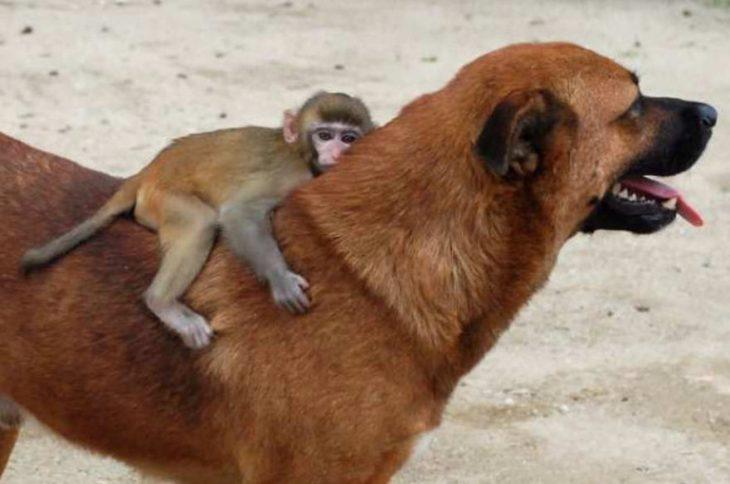 perrito con chango