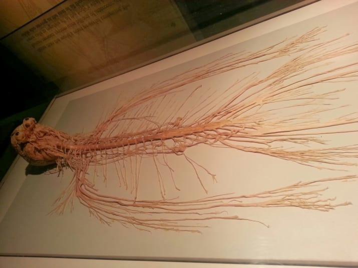 esqueleto de alien