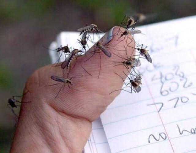 dedo con piquetes de mosquito