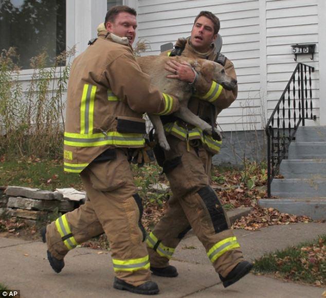 rescate labrador bomberos