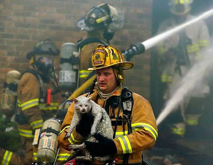bombero rescatando un gato