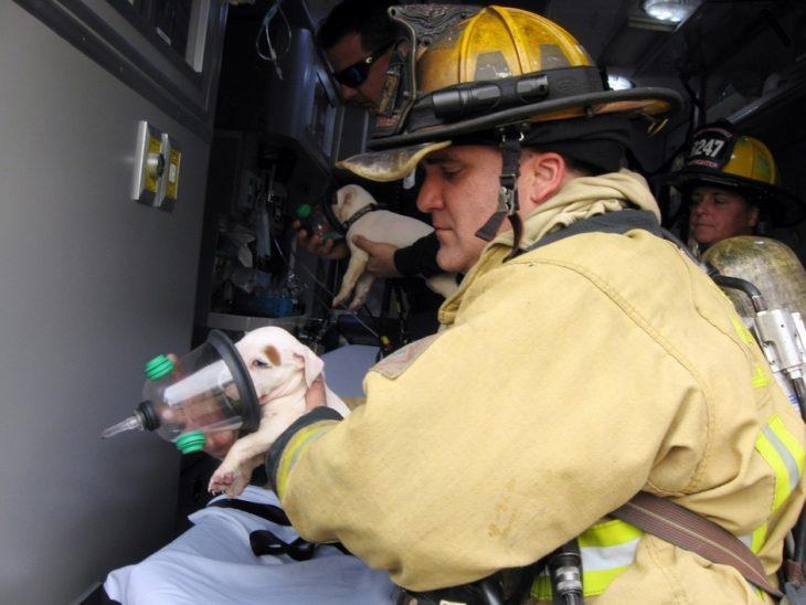 cachorro respiración bombero