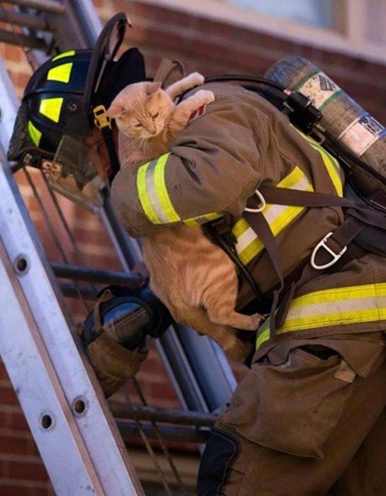 bombero rescatando gato
