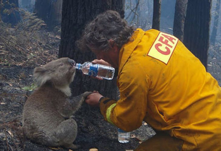 dando agua a un koala
