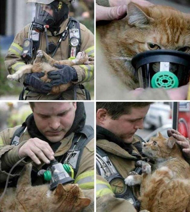 gatito rescate