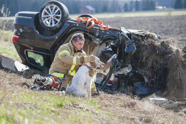 bombero salvando perrito