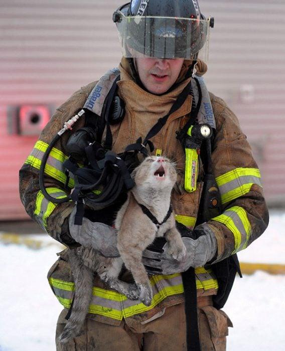 gato llorando rescate