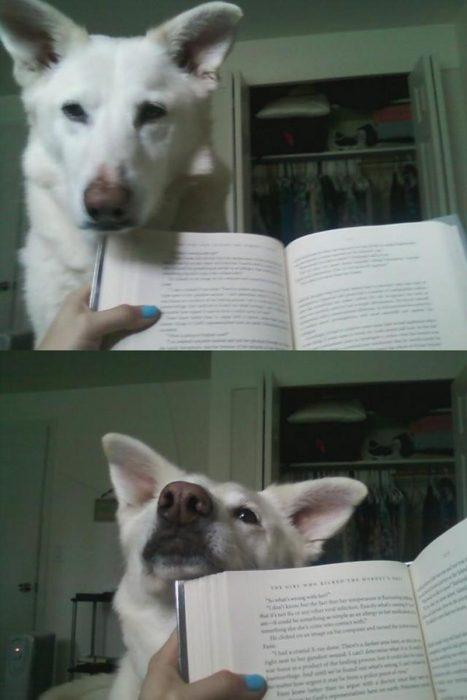 perro interrumpe lector