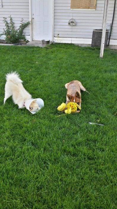 perrito enfermo jugando