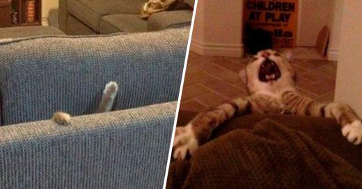 Cover Lista de los gatos más dramáticos del mundo