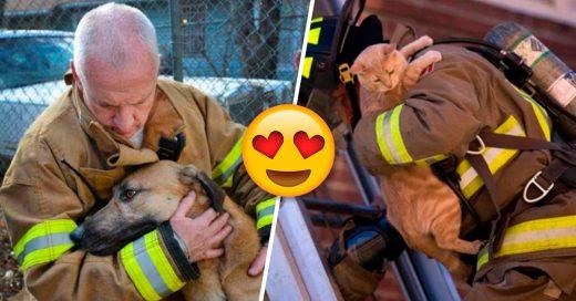 Cover Fotografías de valientes bomberos arriesgándose por salvar animales