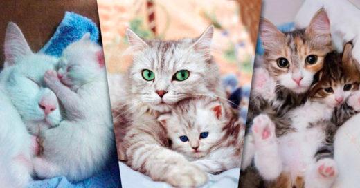 Cover Amor gatuno materno